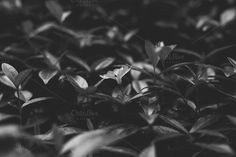 Flower BW in focus by Hombre-cz on Creative Market