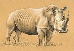 How to Draw a Rhino Drawing with Charcoal and Chalk | Animal Vista
