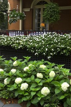 Endless Summer® 'The Bride' Blushing Bride Hydrangea, Soil Ph, Dry Creek, Outside Living, Summer Collection, Curb Appeal, Garden Landscaping, Gardening Tips, Outdoor Spaces