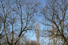 2013-04-30: branches, twigs, blue sky