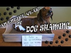 38 best dastardly and funny dachshund videos images on pinterest