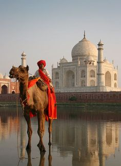 Ride a camel. Camel boy crossing the Yamuna River across the Taj Mahal, Agra, India. Photo by Andre Roberge. Agra, Places Around The World, Travel Around The World, Around The Worlds, Taj Mahal India, Beautiful World, Beautiful Places, Places To Travel, Places To Go