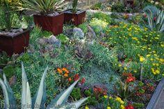 Mixing flowers with succulents in Debra Lee Baldwin's garden – Harmony in the Garden Outdoor Landscaping, Backyard Landscaping, Outdoor Gardens, Landscaping Ideas, Beautiful Flowers Garden, Beautiful Gardens, Sun Loving Plants, Drought Tolerant Plants, Desert Plants