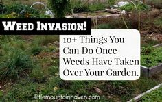 Weed Invasion!!  10+ Things You Can Do Once Weeds Have Taken Over Your Garden.