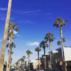 Blue sky and palm trees  #venice #losangeles #venicebeach #la #california #ig_california #igersusa #ig_northamerica #mtllife #instacool #abbotkinney  #instalike #like4like #usa #follow4follow #514 #mtlmoments #mtlblogger #qc #instablog #francaisauxusa #traveler #palmtrees | Photo de @jenesuispasuneblogueuse