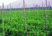 Imagen relacionada Plants, Tomato Plants, Window Boxes, Tomatoes, Plant, Planting, Planets