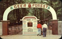 deer forest coloma mi - Google Search