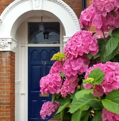 Because every door needs some beautiful flowers beside it.