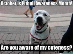 October is Pitbull Awareness Month! Are you aware of my cuteness?