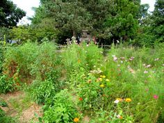 Taking a Walk on the Wild Side of Surburbia how much of our garden should we give to Mother Nature