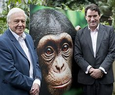 Sir David Attenborough, Alastair Fothergill and Mark Linfield talk conservation efforts at the Q+A for Chimpanzee (01.05.2013)