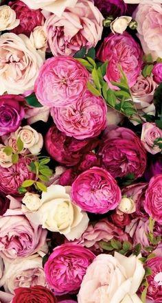 Everything is Coming up Roses Phone Wallpaper My Flower, Pink Flowers, Beautiful Flowers, Pink Peonies, Pink Roses, White Roses, Flower Bomb, Fresh Flowers, Bloom