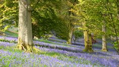 Visit the colour-filled collection of shrubs and trees at National Trust's Winkworth Arboretum, near Godalming in Surrey. Guildford Castle, Stoke Park, Thorpe Park, Tiny White Flowers, In Season Produce, Places Of Interest, Travel Around, Beautiful Landscapes