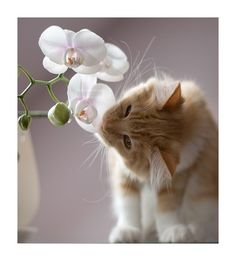 .My cats are always trying to eat my flower arrangements and will sit and stare at them, look at me and then meow.....as if to say please!?