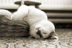 sooooooo tired and tuckered out!!!!!!!!!