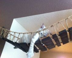 The Indiana Jones Bridge is a beautiful piece of furniture and one of our cats' most loved pieces. Each bridge is hand-crafted and built to order. Our big cat Ickle often falls asleep lounging on his back in the center of his bridge. Cats of all sizes can utilize this bridge for relaxing or to travel across the span of a doorway or other gap.