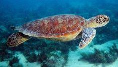 želva v oceánu