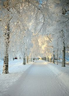 It's a real Winter Wonderland! Walking in a winter wonderland! So true! Snow Scenes, Winter Scenes, Beautiful World, Beautiful Places, Simply Beautiful, Absolutely Gorgeous, Beautiful Scenery, Beautiful Landscapes, Peaceful Places