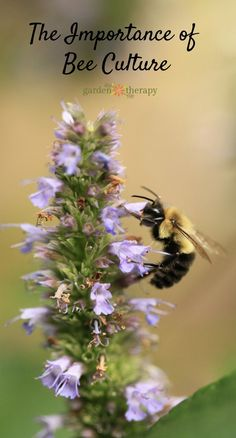 The importance of bee culture - Bee gardening tips for teaching kids about bee culture in a fun and engaging way (and why it is crucial that we do!)