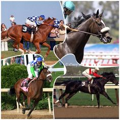 The King- Secretariat The Queen- Zenyatta The Prince- Barbaro The Princess- Ruffian These are the King, Queen, Prince, and Princess of horse racing. (In my opinion) I think Ruffian could have been Queen but sadly she died young and we couldn't see her full potential and what would've happened wether or not she could've kept her lifelong winning streak or lose once or twice, we may never know.