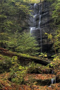 Bankhead National Forest, Alabama (1) From: FlickR, please visit