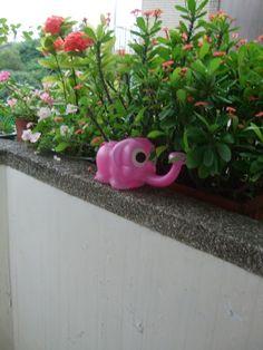 小象的近照 花變多了^^ by Chao Chuan
