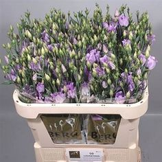 Eustoma Lisianthus carice lavender is 2018 Wedding Trend: Ultra Violet Purple. For lilac and purple wedding flowers to suit your colour scheme, visit our website at www.trianglenursery.co.uk/fresh-flowers!