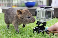 Little joey and the Go Pro camera