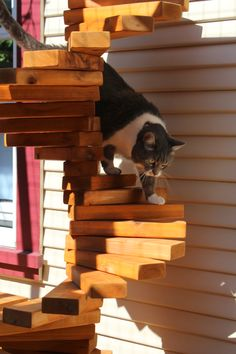 Catios are outdoor enclosures for cats that let them enjoy the outdoors and keep wildlife like birds safe. Learn how to build a catio. Sisal, Cat Stairs, Cat Fence, Adventure Cat, Nature Adventure, Outdoor Cat Enclosure, Cat Run, Cat Playground, Matou