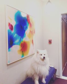 Blake Lewis has a new fan. Read why in our recent interview with the artist at http://news.fotofoamco.com/blake-lewis-darkroom #darkroom #dogroom #dogs #colors