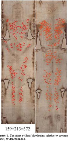 Scourge marks on the Shroud of Turin.  Reddish brown stains that have been said to include whole blood are found on the cloth, showing various wounds that, according to proponents, correlate with the yellowish image, the pathophysiology of crucifixion, and the Biblical description of the death of Jesus.