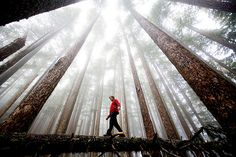 Olympic National Park, Washington Photos From the 2009 National Geographic International Photo Contest Image by Michael Hanson Image Nature, All Nature, Nature Images, National Geographic, Beautiful World, Beautiful Places, Voyager Loin, Forest Bathing, Parc National