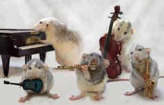 Who knew that mice played instruments?  Celebrate music and mice by seeing ANATOLE, a world premiere musical!