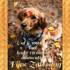 Weekender, Good Morning, Hug, Qoutes, Gifs, Animals, Friends, Funny, Buen Dia