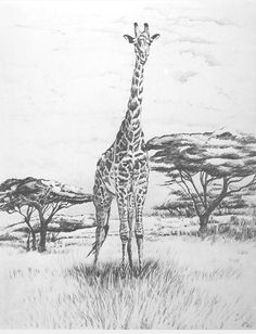 GiraffeWelcome to GIFT OF THE SUN Gallery featuring 12 wildlife limited edition, lithograph prints on archival paper, created from my original graphite pencil drawings. Signed and numbered in editions of 25, on off white acid free paper measuring 17x22 inches. suitable for any room in your hom...