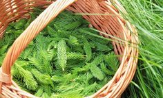 Smrkový sirup na rýmu a kašel - vytvořte si vlastní | Přímo od Včelařky Carrots, Illustration Art, Herbs, Vegetables, Food, Diet, Syrup, Essen, Carrot