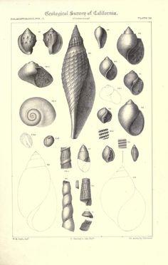 1 - Palaeontology - Biodiversity Heritage Library