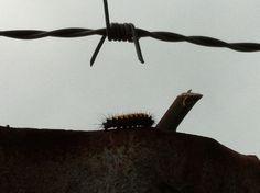 Un acorazado de guerra insectora