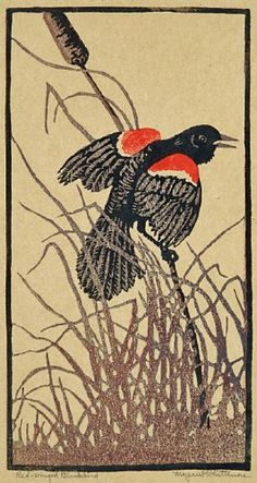 Red-winged blackbird,  Margaret Evelyn Whittemore