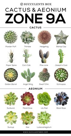 This is an amazing resource of cactus and succulent plants for Zone The infographics lay out each selection with clear photos and names. I know I am going to keep this around for future succulent identification purposes. Succulent Gardening, Succulent Care, Planting Succulents, Container Gardening, Succulent Plants, Succulents Drawing, Succulents Painting, Zone 9 Gardening, Succulents Wallpaper