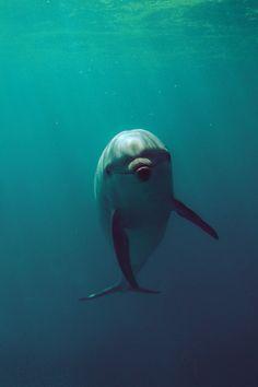 next on my bucket list... swim with a dolphin :-)