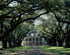 Tree Lined Walkway Leading to Plantation House