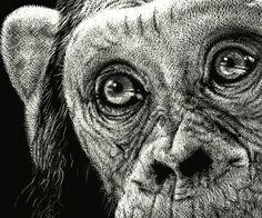 Diane Lee Animal Close Up, Pencil Drawings Of Animals, Monkey Tattoos, Scratchboard Art, Scratch Art, Pet Art, House Sketch, Black Paper, Pencil Art