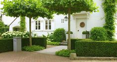 Green and white entrance garden