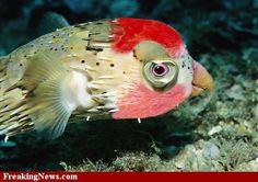 Fish pictures pictures of fish fish facts national for Parrot fish facts
