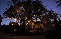 El árbol de la lámpara de plata árboles Lago iluminación documental instalación de luz