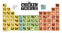 The Chicken Table Poster features 70 chicken breeds organized by egg color. http://www.angrysquirrelstudio.com/the-chicken-table-poster/
