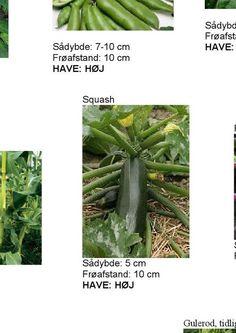 #ClippedOnIssuu from Kom godt i gang i haven