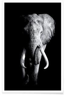 Vintage Elephant as Poster by Wouter Rikken Photo Elephant, Elephant Poster, Elephant Love, Elephant Art, Elephant Tattoos, Elephant Wallpaper, Animal Wallpaper, Elephant Photography, Animal Photography