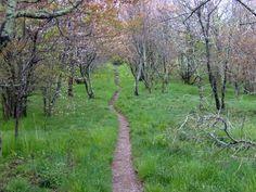 To hike the Appalacian Trail.., on my bucket list!!!